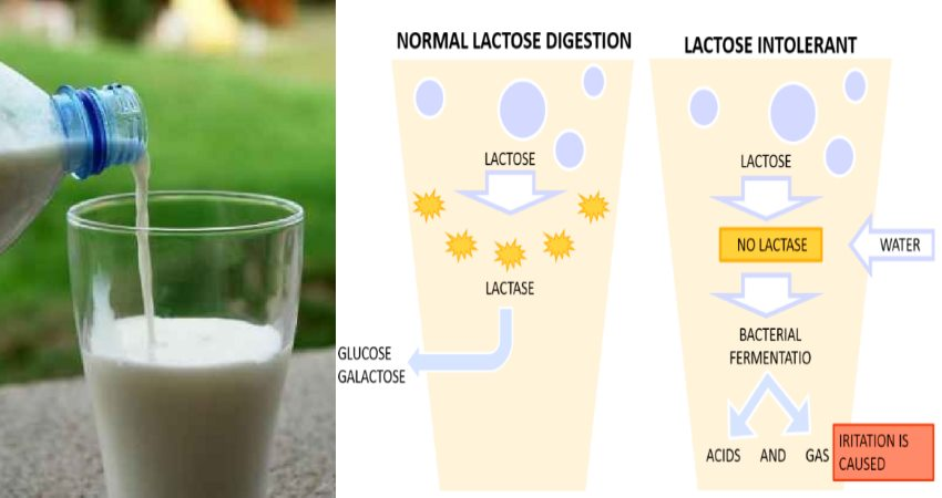 Should You Give up Dairy ? Health Benefits of a No Dairy Diet